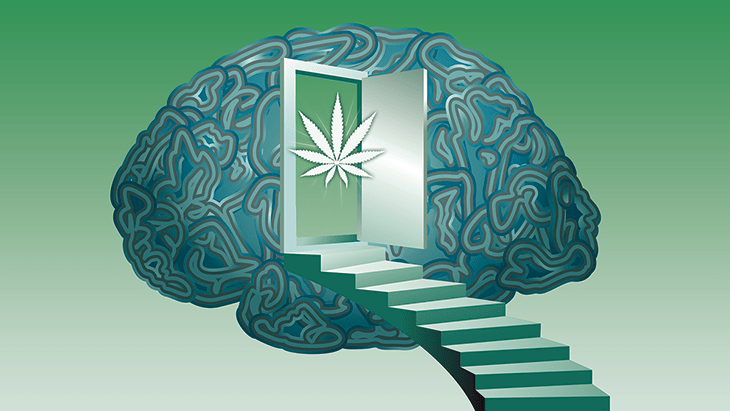 Marijuana and the Brain