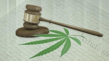 California: Nevada County District Attorney to Dismiss Decades' Worth of Marijuana Convictions