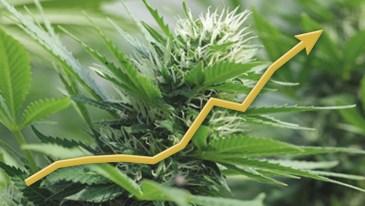 Marijuana Polls