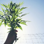 Marijuana Incarceration
