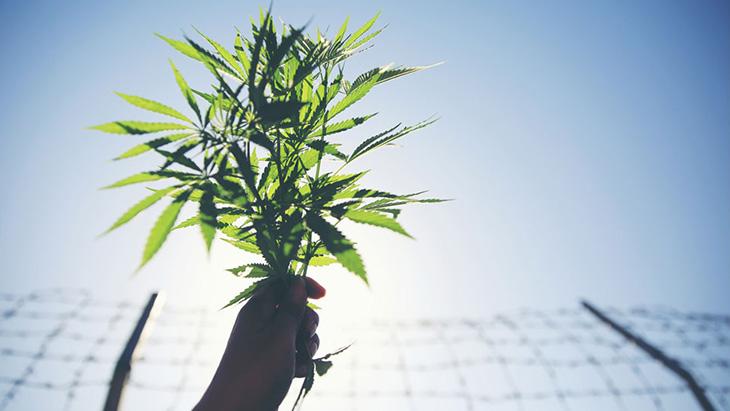 Marijuana Incarceration