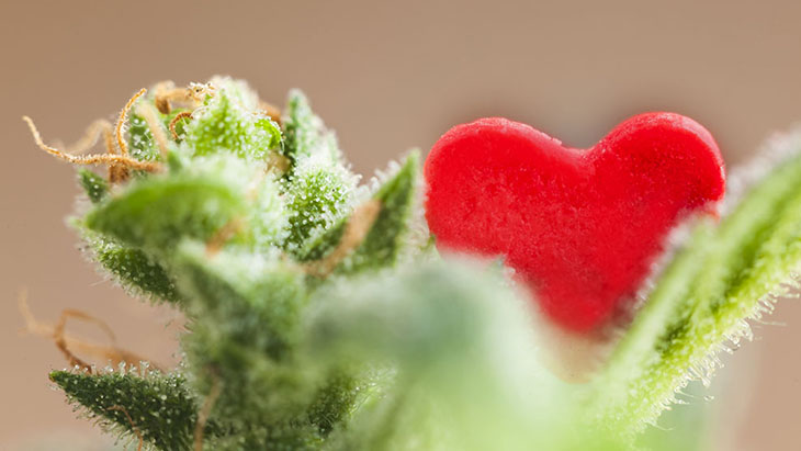 Marijuana and the Heart