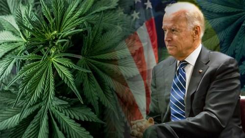 Joe Biden and Marijuana