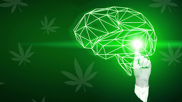 Marijuana and the Brain
