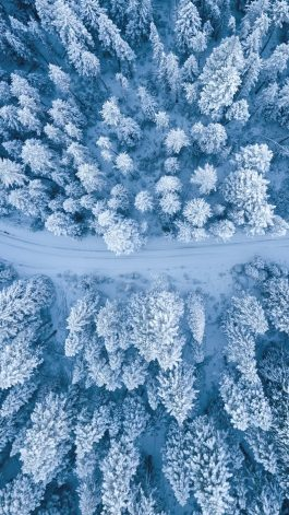 aerial photography of snow covered trees