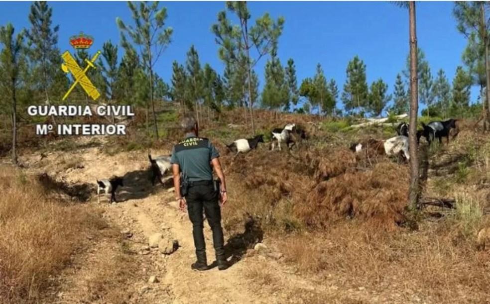 La Guardia Civil rescata a un cabrero de 84 años en una poza