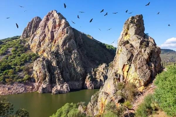 Otra primavera sin turismo ornitológico
