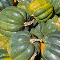 Green Winter Squash