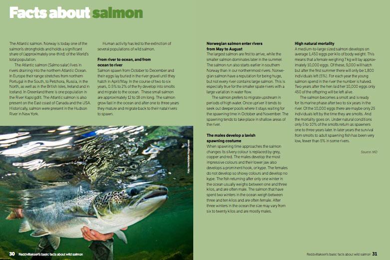 Reddvillaksens Salmon Facts