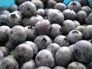 Bybee Farms blueberries
