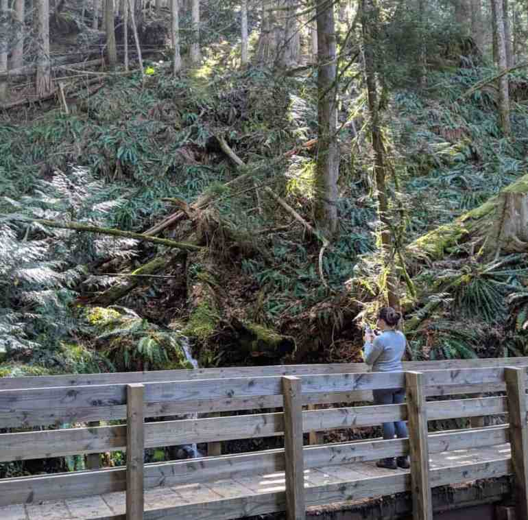 Bridge on lower Mailbox Peak Trail
