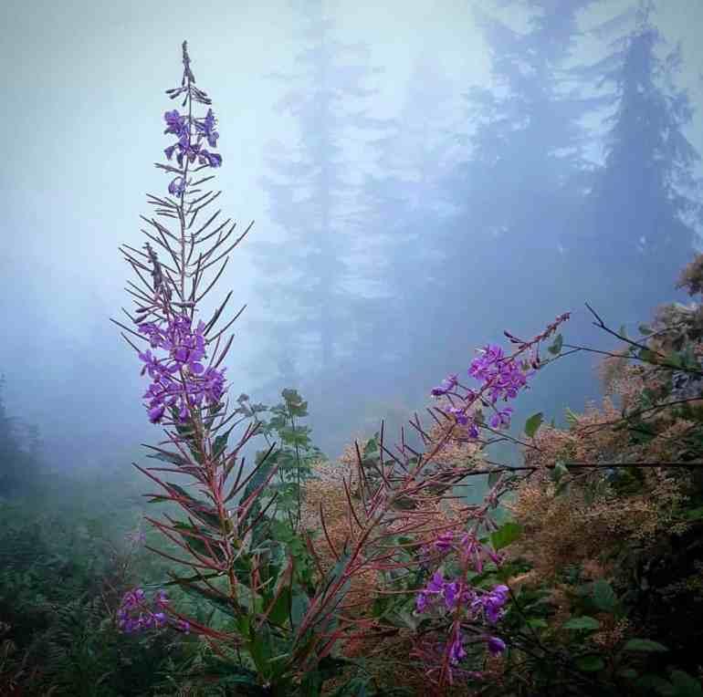 Mailbox Peak Wildflowers Aug 27, 2018
