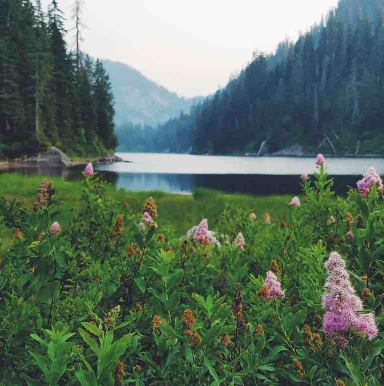 Snoqualmie Lake blooming hardhack