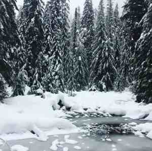 Winter Wonderland along Snoqualmie Nordic Center trail