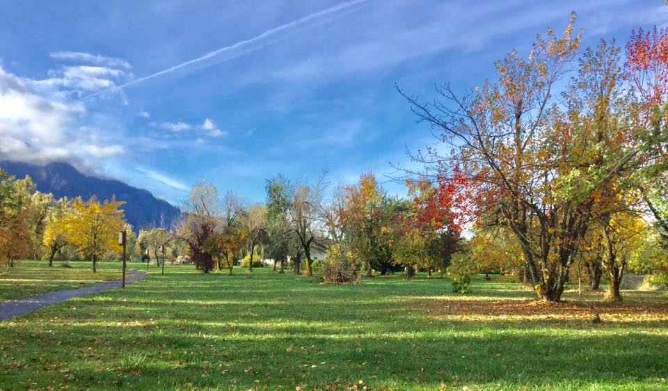 Fall in North Bonneville