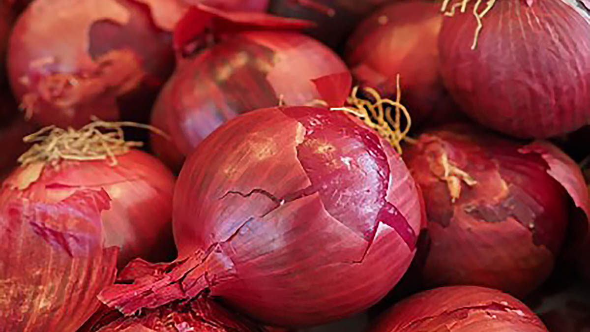 Gov't allows importation of 35K metric tons of red onions