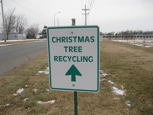 Christmas tree recycling photo
