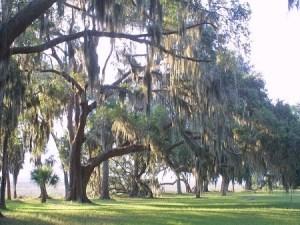 mossy-oaks-webimage