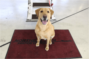 Pets Fly Private Charter at Northeastern Aviation