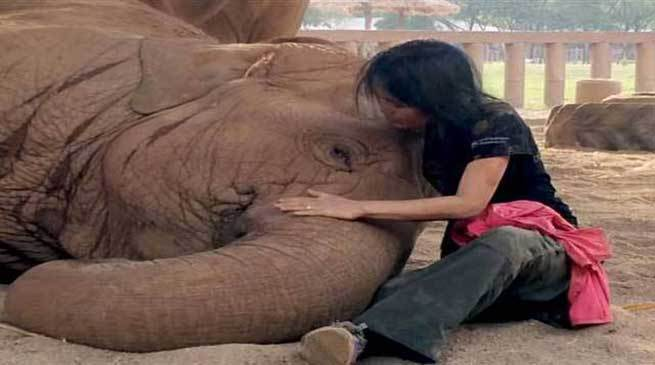 Must watch- Elephant falls asleep after woman sings lullaby