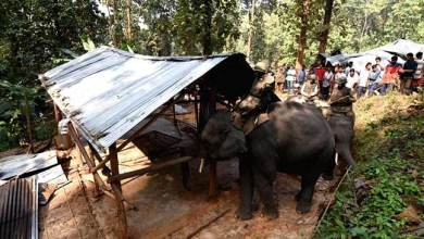 Massive Eviction Drive in Amchang Wildlife Sanctuary, 400 houses demolished