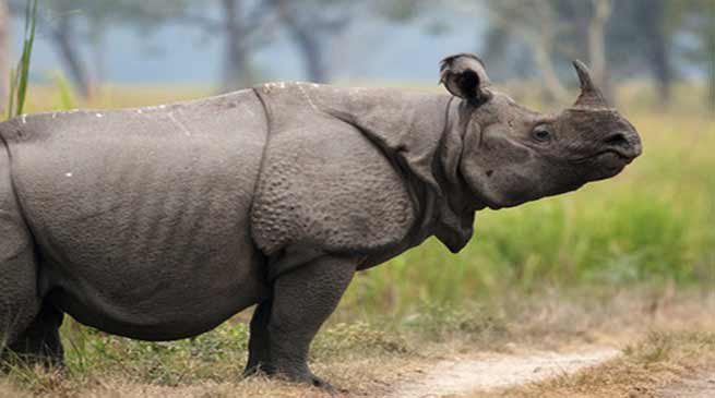 Assam: Poachers killed adult Rhino out side KNP