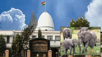 Transfer of elephants case: Gauhati HC seeks clarification, hearing continue