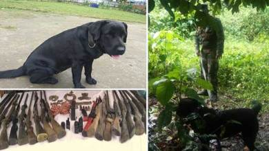 """Assam: Indian Army dog """"jaari"""" help in recovery of explosive and weapons"""