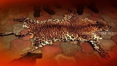 Assam: Animal skins smuggling racket busted, 3 poachers arrested