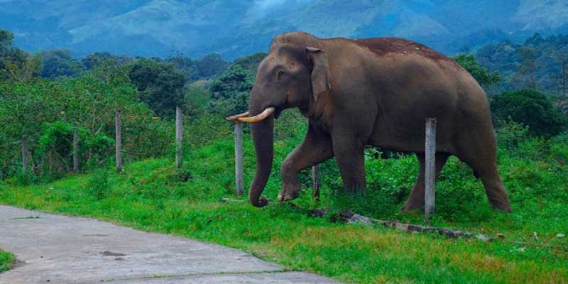 Assam: Two Elephant die after getting electrocuted in Sivasagar