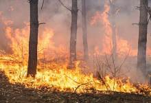 Mizoram: 1,300 forest fires reported in 2020