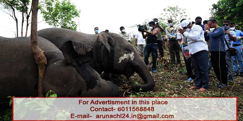 Assam Forest Minister orders enquiry in to death of 18 elephants in Nagon