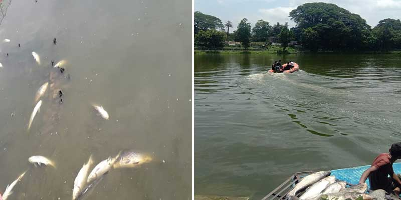 Assam: Dip in oxygen level, high organic load behind deaths of fish at Dighalipukhuri