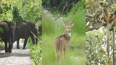Assam: Raimona National Park will fulfill the UN vision of Ecosystem Restoration- Minister E&F