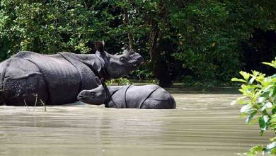 Assam: Meeting held to mitigate flood in Kaziranga National Park