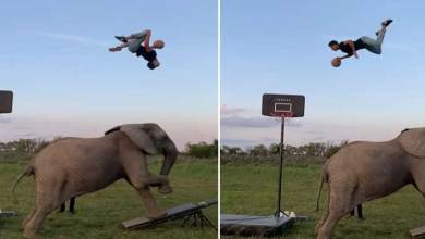 Viral Video: Man performs amazing basketball tricks with involving an elephant