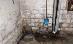 mold growth or efflorescence