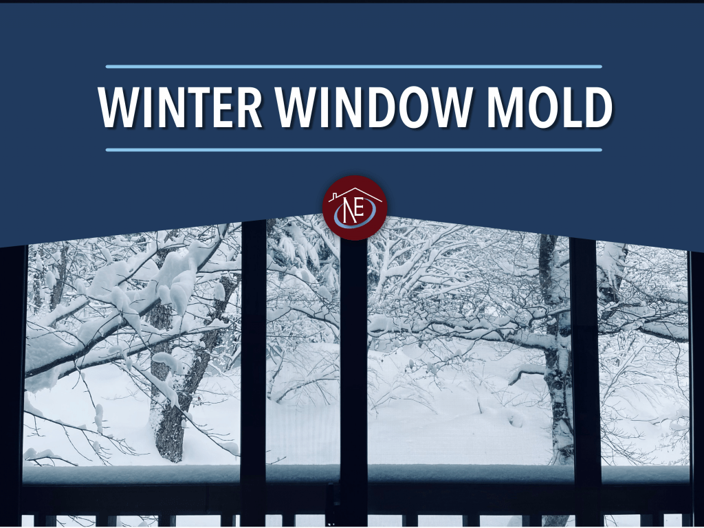 winter window mold
