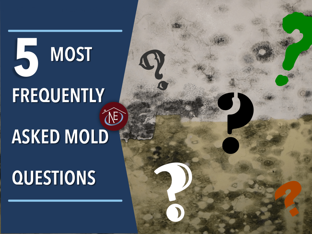 5-Most-Frequently-Asked-Mold-Questions