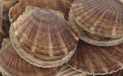Spring Seafood Report