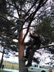 Tree climbing!