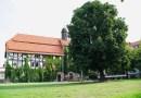 Kastanie am Münsterplatz wird wieder zum Schnullerbaum