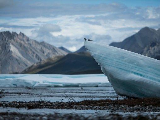 Arctic Program