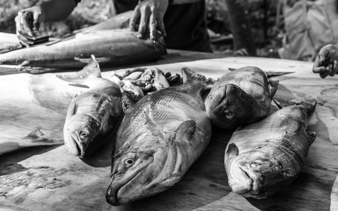 black and white salmon, a person's hands working in the background