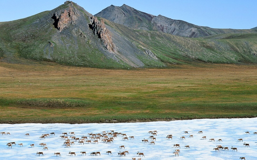Arctic Refuge Action: What's Next?