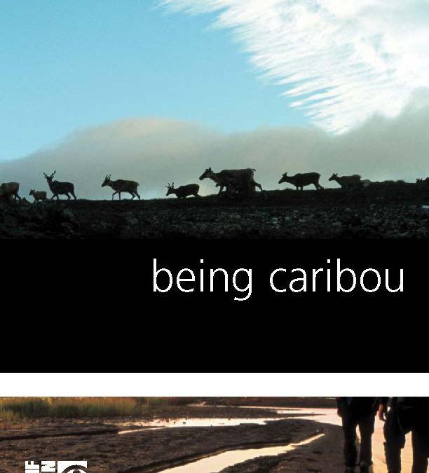 Being Caribou screening