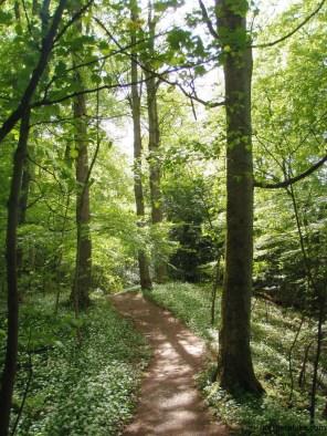 Calfhall Wood, Richmond, Yorkshire