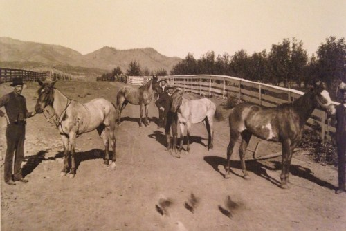 """This photo is of """"The Flowers Boys and their Horses, Bellvue, CO."""" From left to right is most likely: Ben, Thornton Wesley, unknown, and Sardis (Sardie) Flowers. These were probably their horses that ran at the racetrack."""