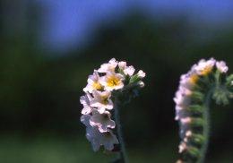 North Cyprus Flowers