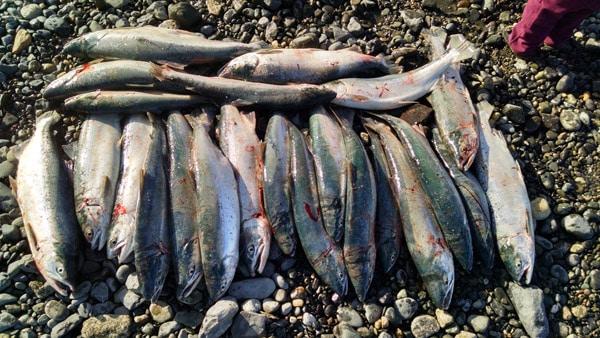 Alaska Dipnetting